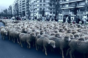 Sheep_mouton.rebelle